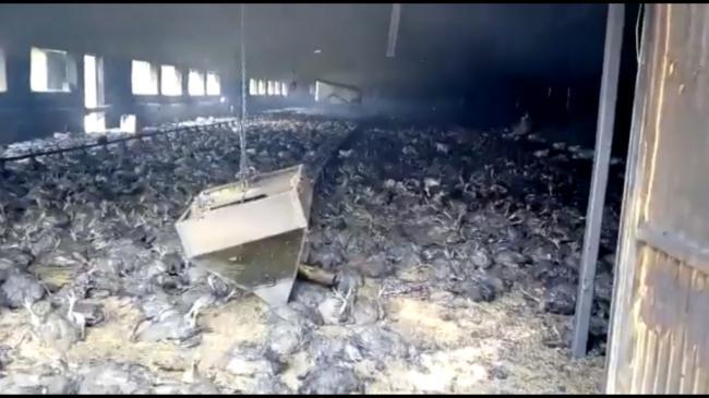 Un incendio mata a 20.000 pollos en una granja de Vélez Blanco