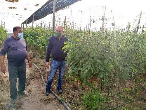 La helada daña 100 hectáreas agrícolas de Níjar