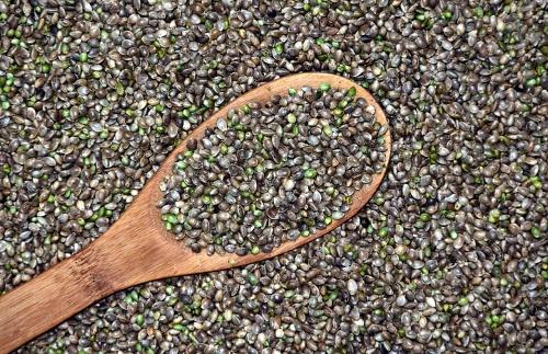 Qué beneficios aportan para la salud las semillas de cannabis