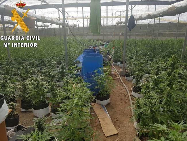 La Guardia Civil localiza un invernadero con más de 2.300 plantas de Marihuana