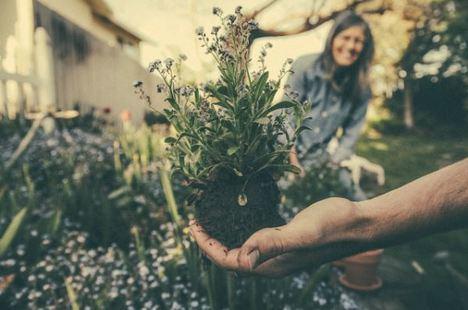 Conoce los beneficios de la jardinería para la salud