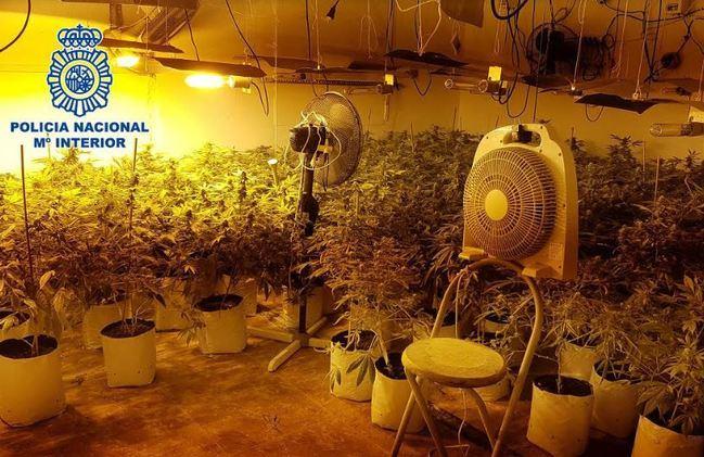 55 kilos de marihuana intervenidos a un clan familiar