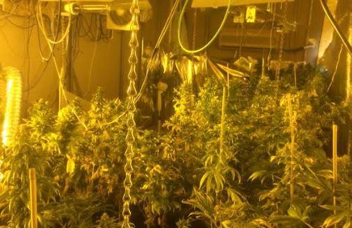 La Policía desmantela una plantación indoor de marihuana en el Quemadero
