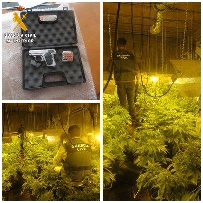 Dos detenidos y dos investigados tras hallar 422 plantas de marihuana y un arma corta en Níjar