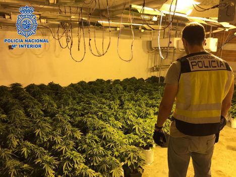 Desmantelada en el Ejido una plantación de marihuana que funcionaba como una pequeña empresa