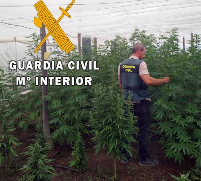 Arrestado el responsable de una plantación de marihuana que había ardido