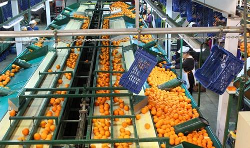 Almería es la cuarta productora de cítricos de Andalucía