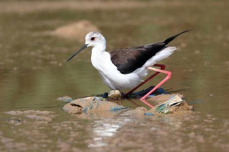 En peligro la nidificación de aves en la Balsa del Sapo