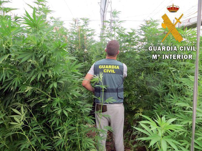 Cuatro detenidos en la mayor plantación invernada de marihuana en lo que va de año