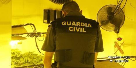 La Guardia Civil detiene a dos personas 379 plantas de marihuana en Benahadux