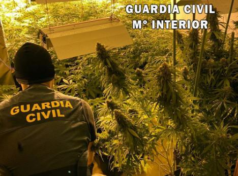 Tres detenidos por un plantación de marihuana en Roquetas