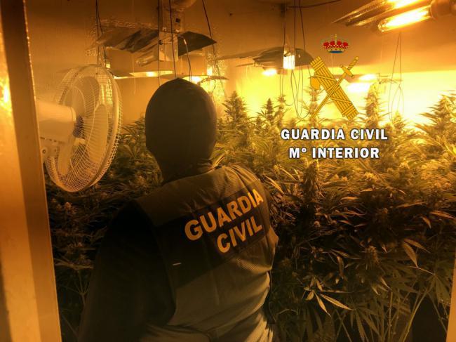 Localizan 232 plantas de marihuana en una casa abandonada de Roquetas