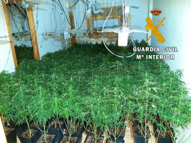13 enganches eléctricos ilegales para mantener 800 plantas de marihuana