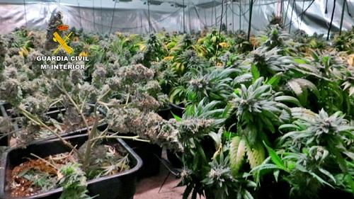 8 detenidos por una plantación de marihuana que usaba electricidad pública en Huércal