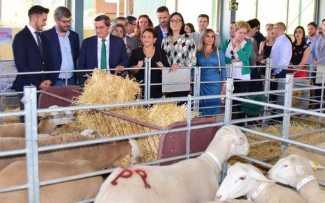 Ovino almeriense compite en la XX Feria Agroganadera de Huéscar