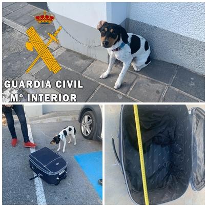 Interceptada una persona que pretendía viajar en autobús con un perro encerrado en una maleta