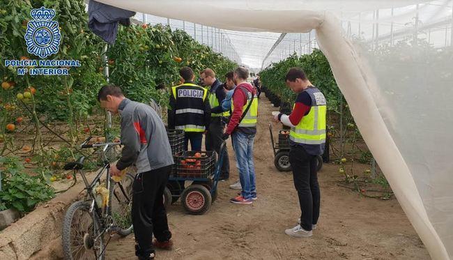 Empresarios agrícolas colocan sus indentidades a ilegales para emplearles