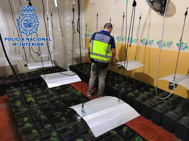 La Policía Nacional aprehende más de 1000 plantas de marihuana y detiene a seis personas