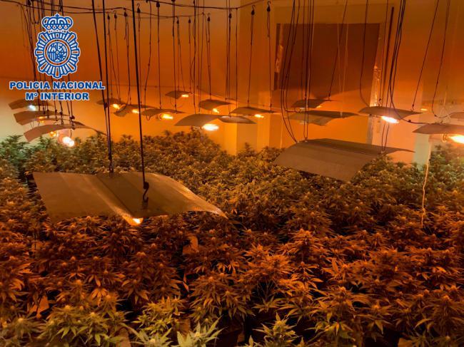 Solo en El Ejido ya van 59 detenidos este año por cultivar marihuana