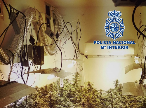 Descubren una plantación de marihuana indoor al sofocar un incendio