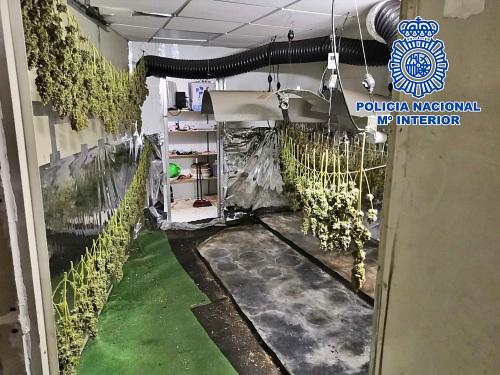 Una nave destinada a autocaravanas ocultaba una plantación de marihuana