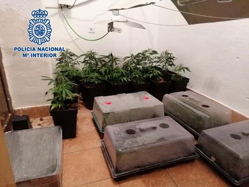 Cuatro detenidos cuanto intentaban deshacerse de material para cultivar marihuana