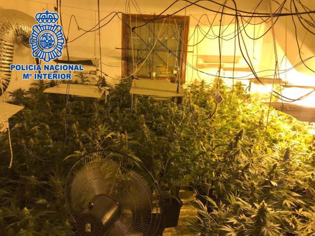 Una pareja con 40 detenciones es arrestada al estar al frente de un cortijo convertido en plantación de marihuana